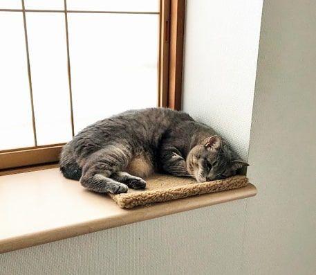 モコモコ中敷きの上で眠る猫