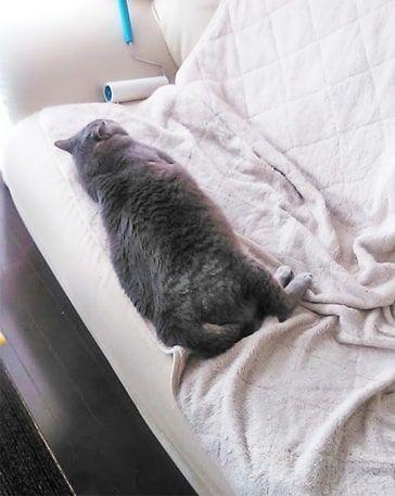 ソファのぎりぎりで眠る猫