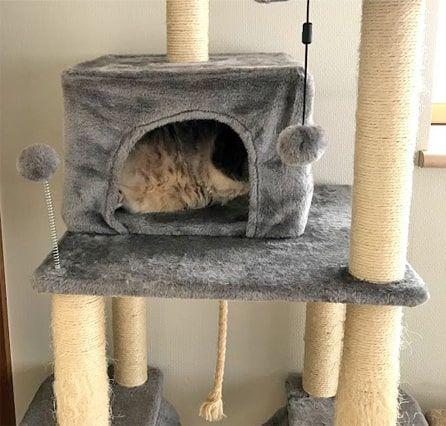猫ハウスの中にきっちり納まる猫