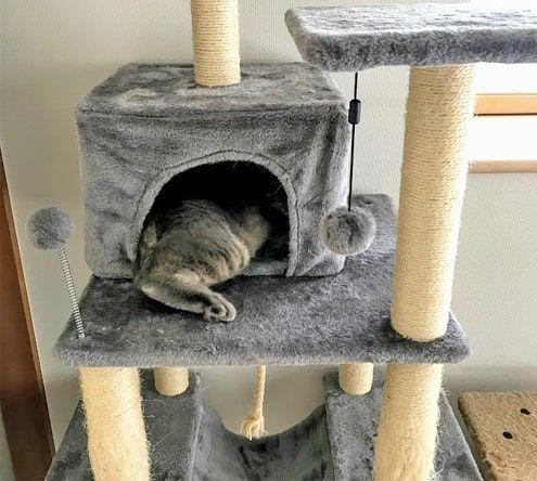 猫ハウスから出た足が手羽先のようになる猫
