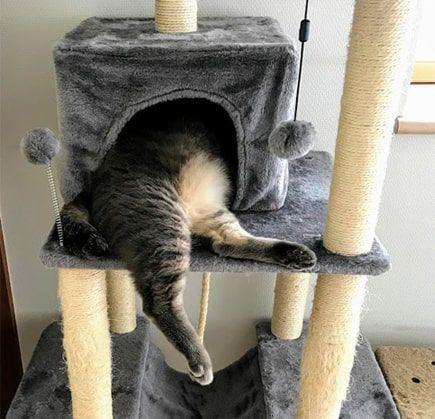猫ハウスから下半身がむっちり出ている猫