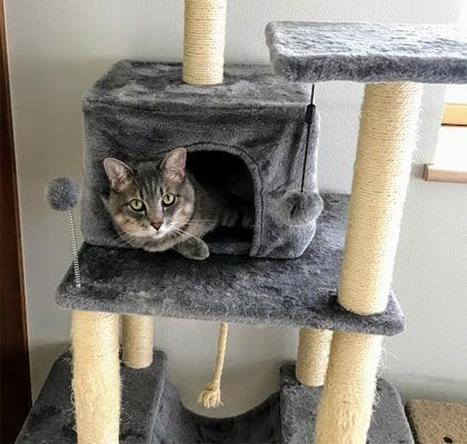 猫ハウスから話しかけるように顔を出す猫