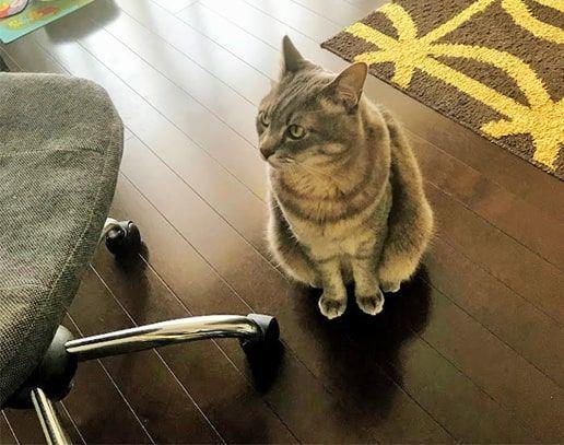 イカ耳で外の音を気にする猫