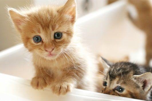 可愛い2匹の子猫の写真