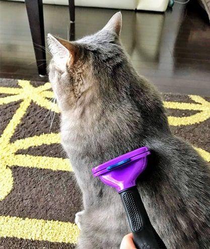 猫の背中の毛をファーミネーターでとかす