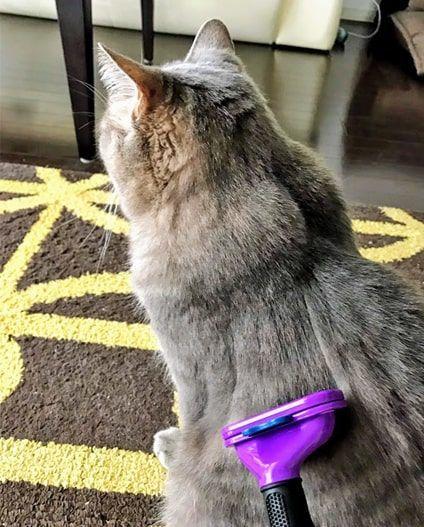 猫の背中をファーミネーターでとかし続ける