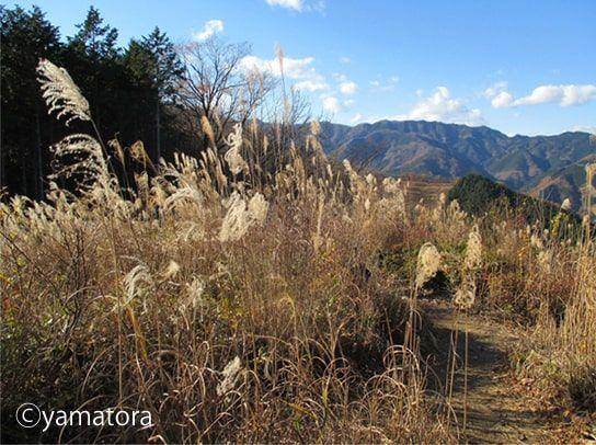 棒ノ折れ山からのススキの景色