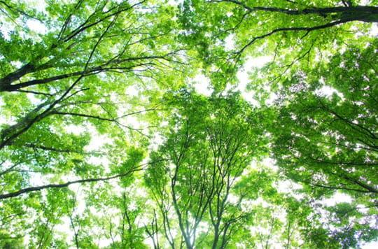 空一面を覆い尽くす木々の緑