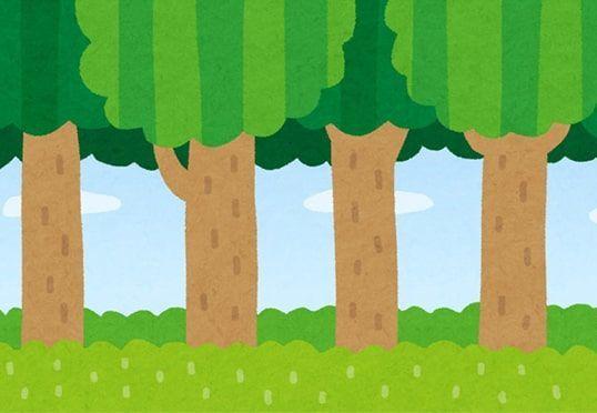 木々が連なる森のイラスト