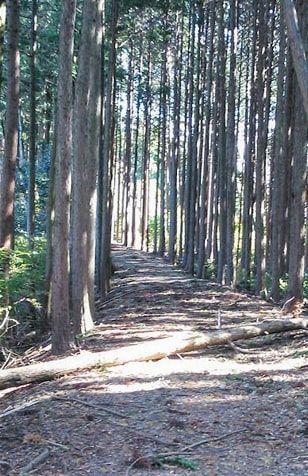木漏れ日のハイキングコース