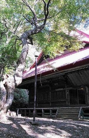 高山不動尊と立派な銀杏の木