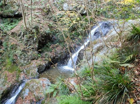 白谷沢の滝