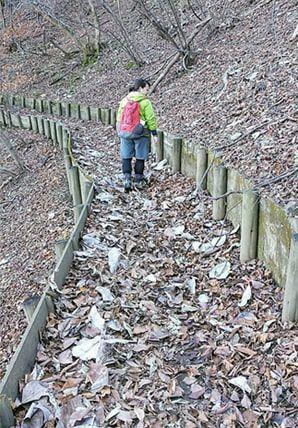 落ち葉でいっぱいの登山道