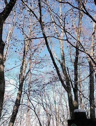 白木と青空