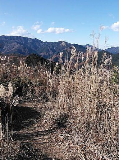 棒ノ嶺ススキから臨む奥武蔵の山々