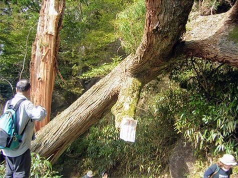嵐で折れた木を見つめるおじさん