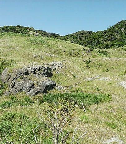 開放感のある広い野原