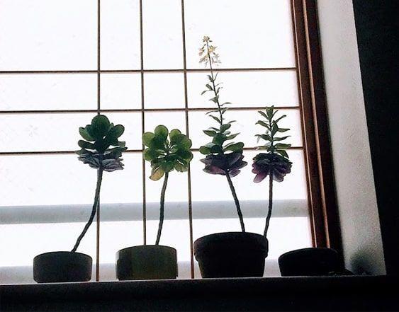 出窓の障子をバックに置いた葉牡丹の鉢