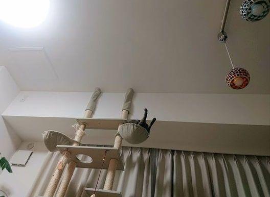 スケキヨのように足を上げてポーズを決めている猫のかまどさん