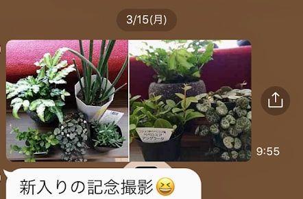 友人から送られてきた観葉植物のLINE