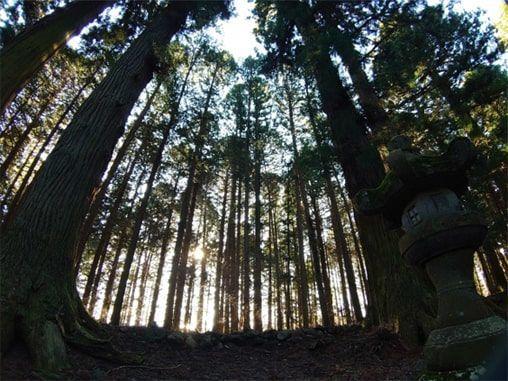 木漏れ日が差す薄暗い樹林帯