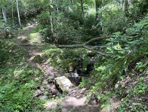 登山道の道分かれ