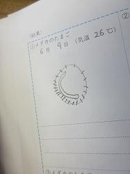 f:id:kagiyas:20210609195922j:plain