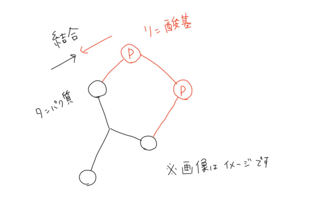 f:id:kago486:20190513224620j:plain