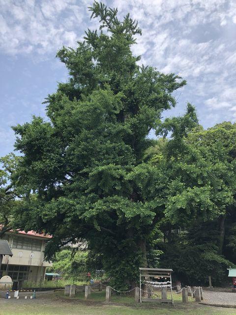 鹿児島御朱印神社樹齢千年イチョウ宮浦宮霧島市福山