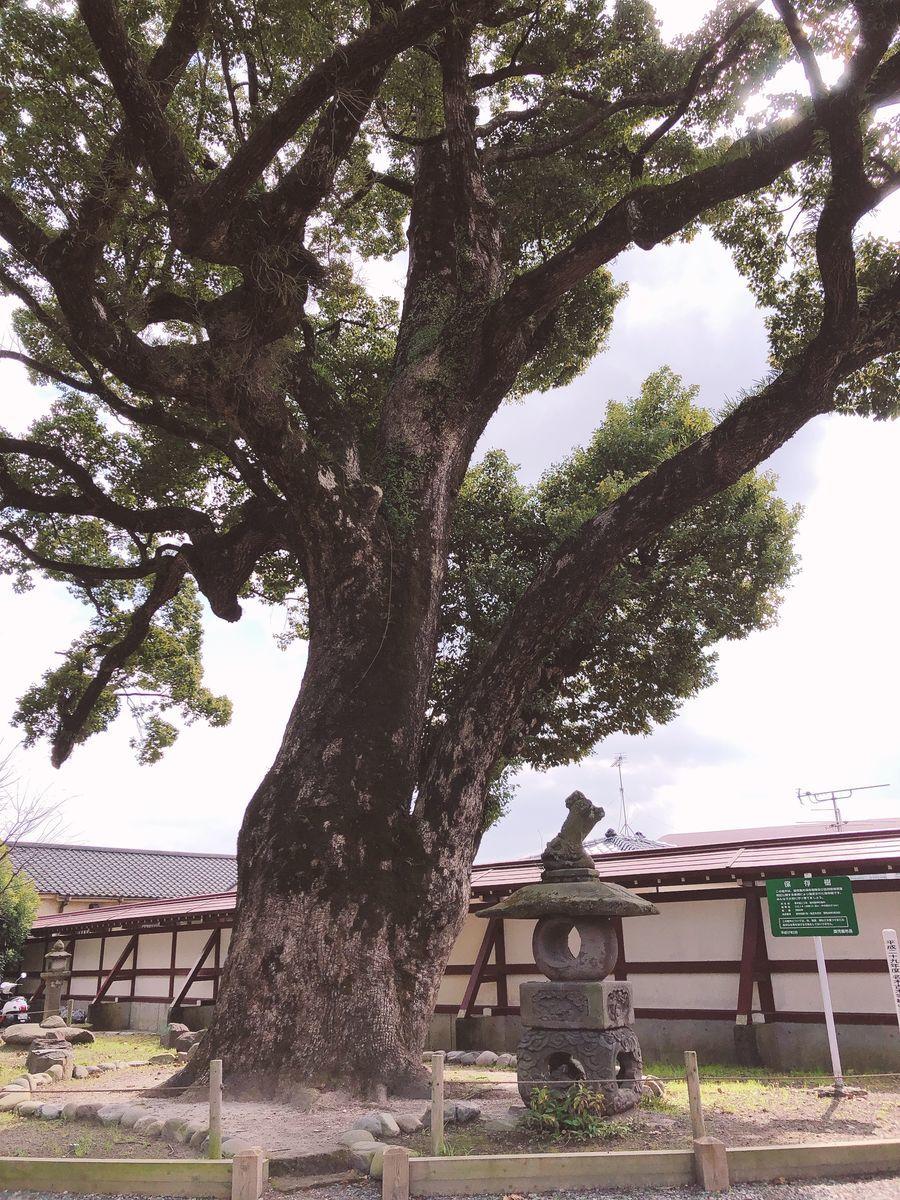 鹿児島御朱印巡りブログ鹿児島神社鹿児島市草牟田