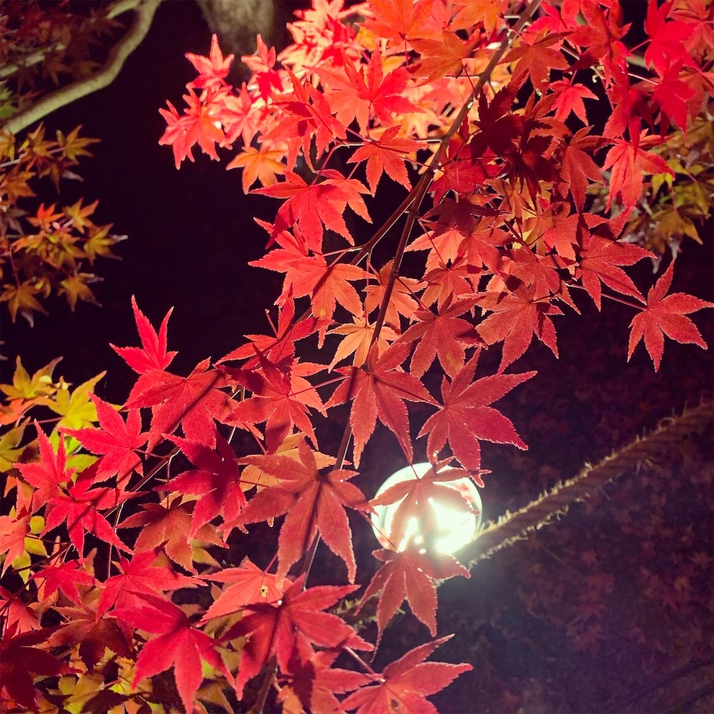 f:id:kagoshimaimmigrate:20191203213306j:image