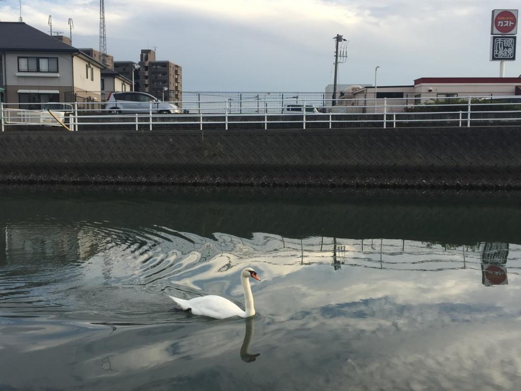 f:id:kagoshimayoshiko:20161027114420j:plain