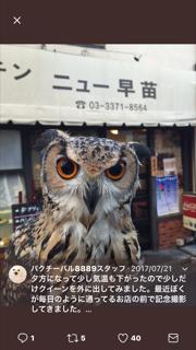 f:id:kagura8736:20171206115648p:plain