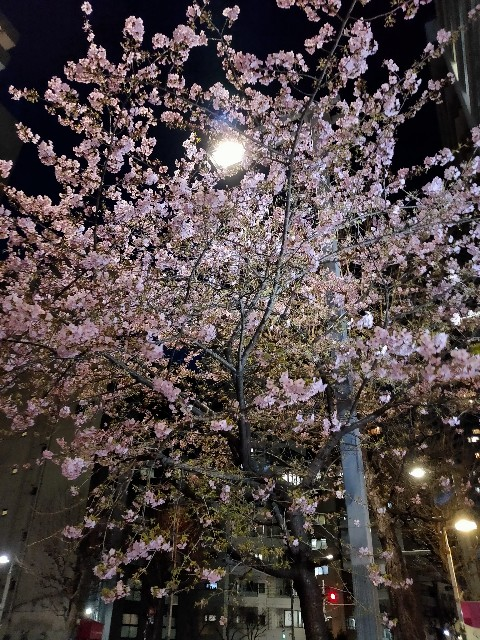 f:id:kahochan_blog:20210219222955j:image