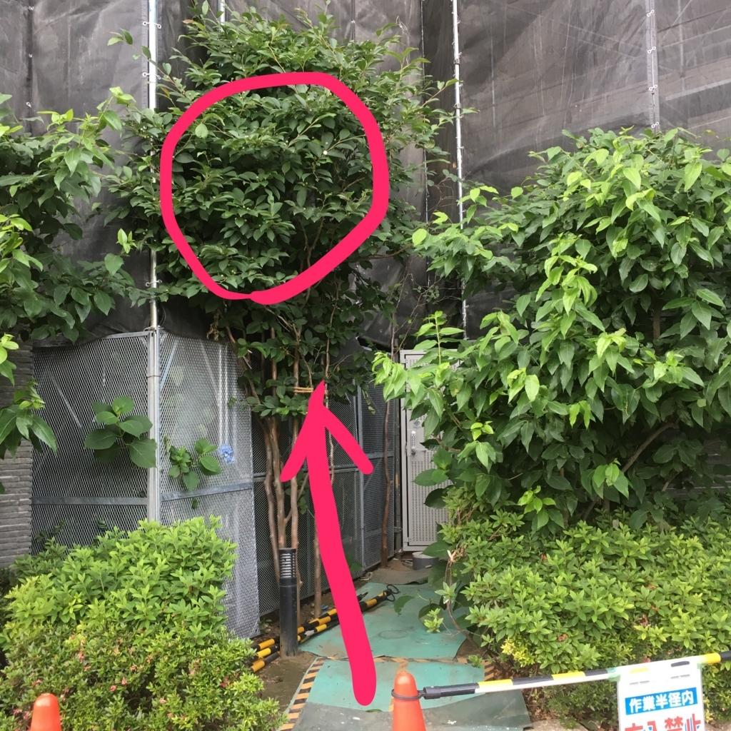 f:id:kai-koume:20170604113113j:plain