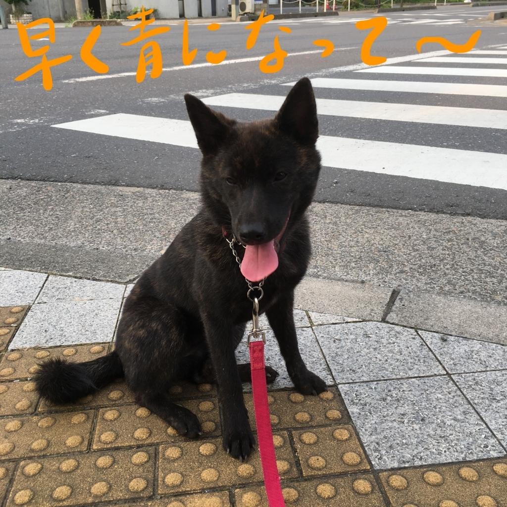 f:id:kai-koume:20170716154212j:plain