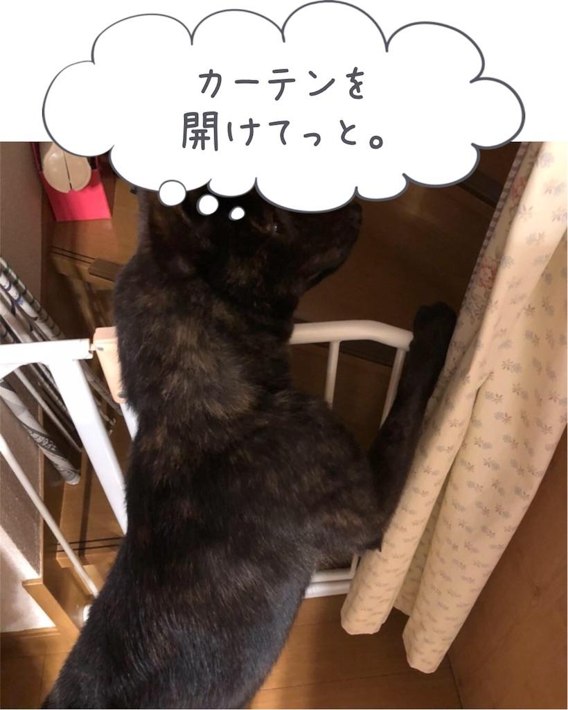 f:id:kai-koume:20180317200605j:image