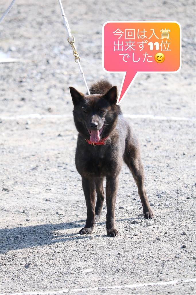 f:id:kai-koume:20180403190949j:image