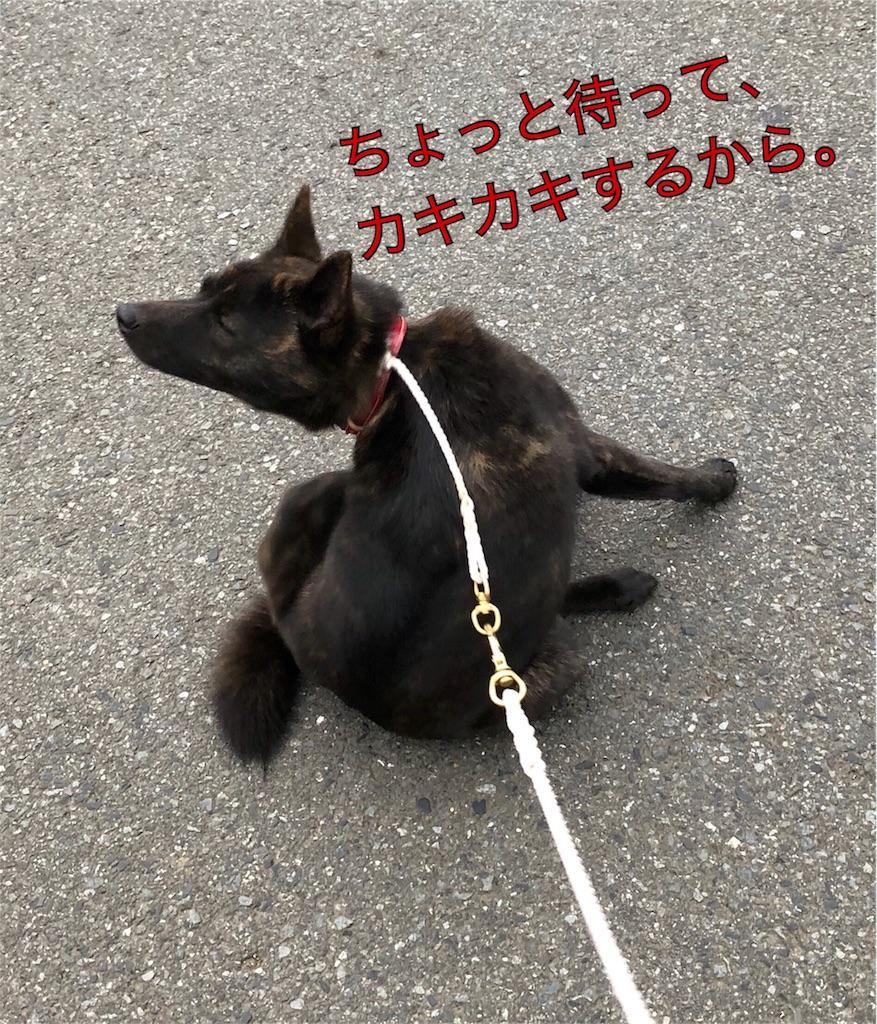 f:id:kai-koume:20180417075457j:image