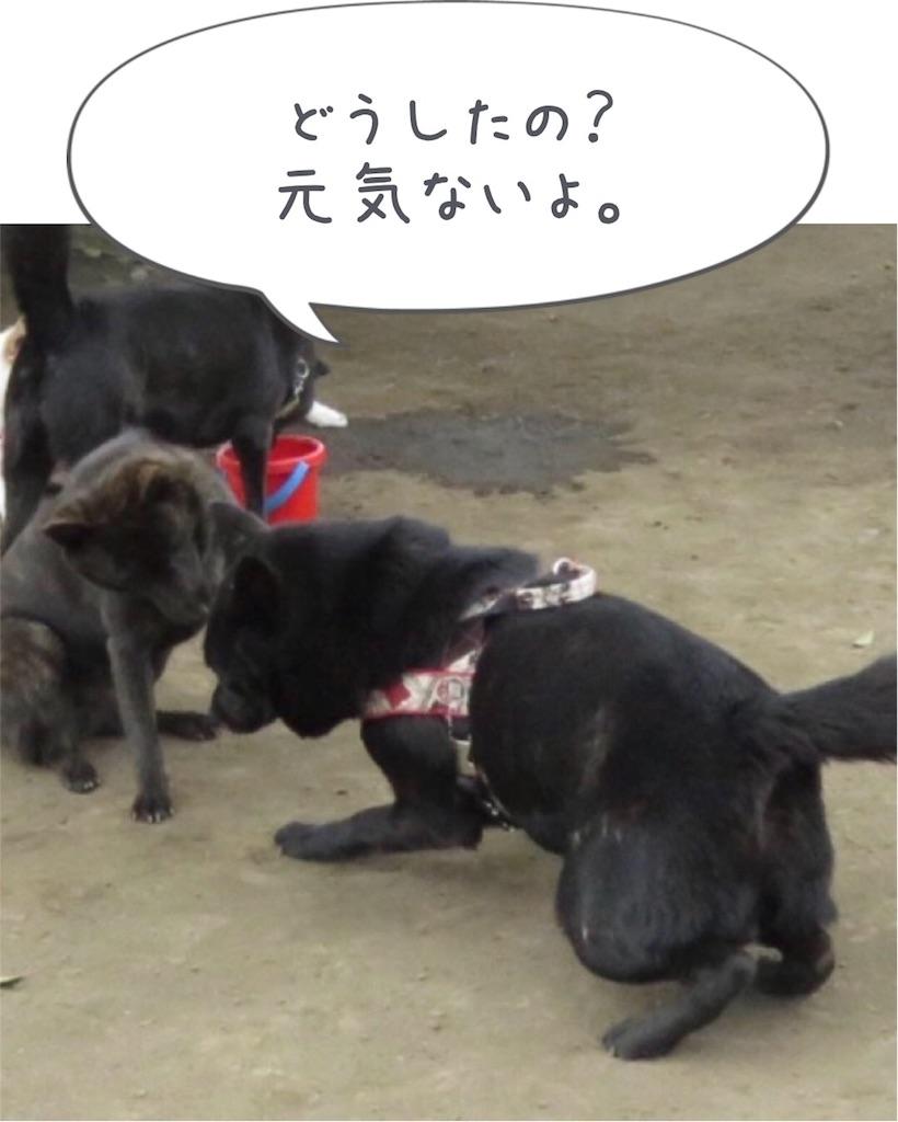 f:id:kai-koume:20180514045640j:image