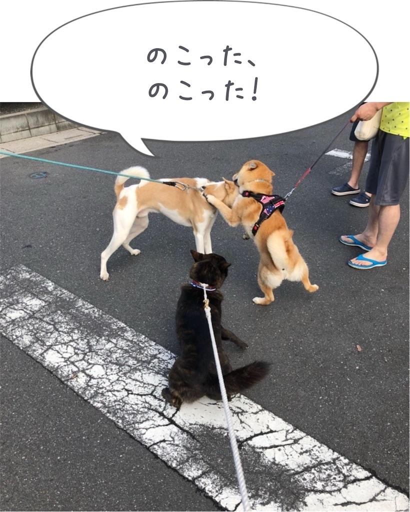 f:id:kai-koume:20180519105054j:image