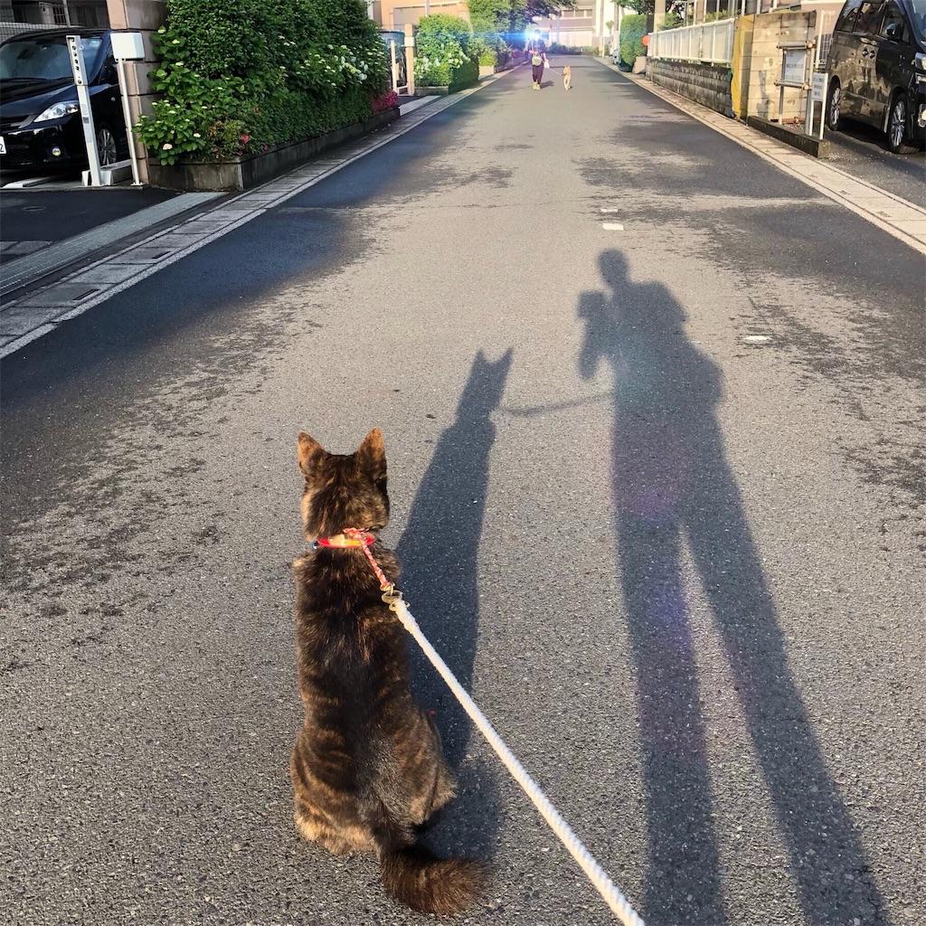 f:id:kai-koume:20180524082208j:image