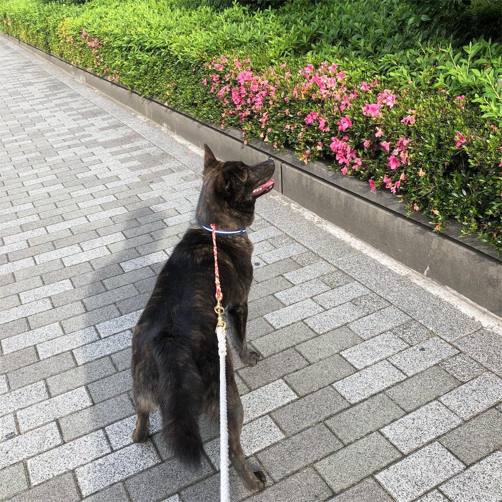 f:id:kai-koume:20180526111807j:image