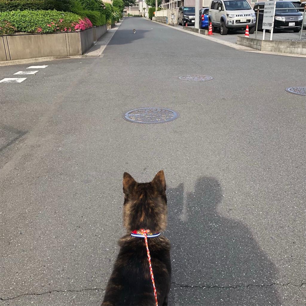 f:id:kai-koume:20180526133824j:image