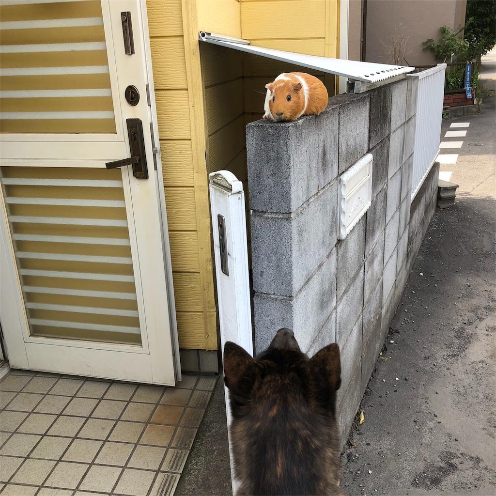 f:id:kai-koume:20180526134525j:image