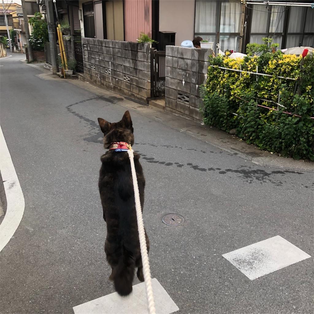 f:id:kai-koume:20180529074436j:image