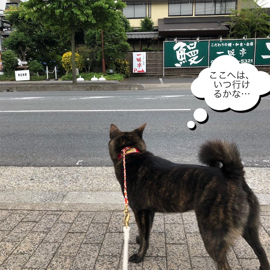 f:id:kai-koume:20180530081602j:image