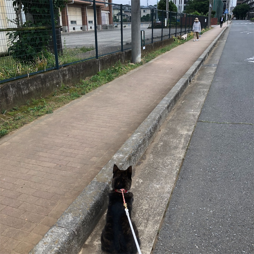 f:id:kai-koume:20180530081948j:image