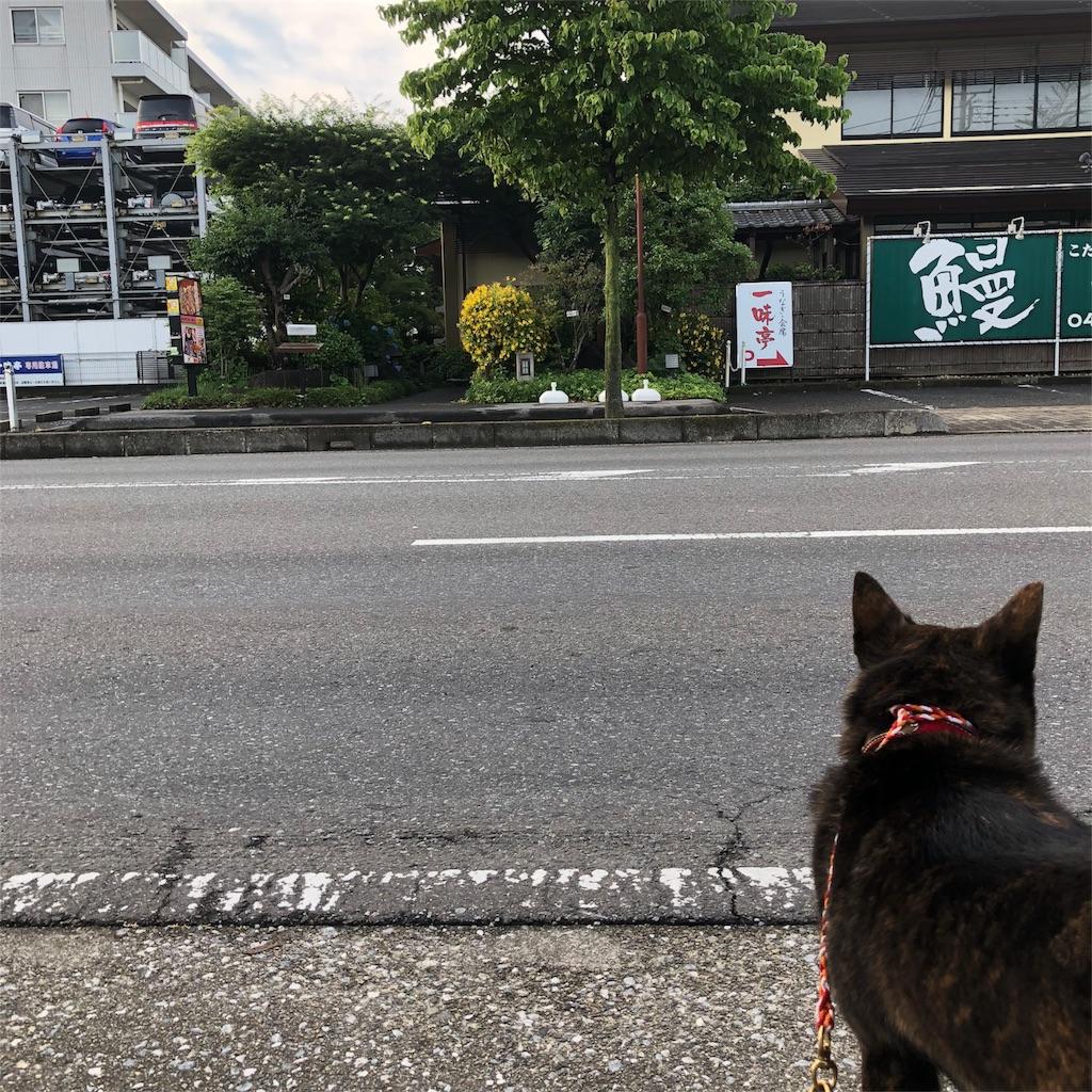 f:id:kai-koume:20180531075132j:image