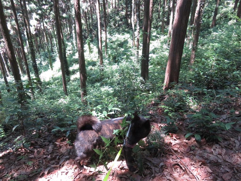 f:id:kai-koume:20180604203034j:image
